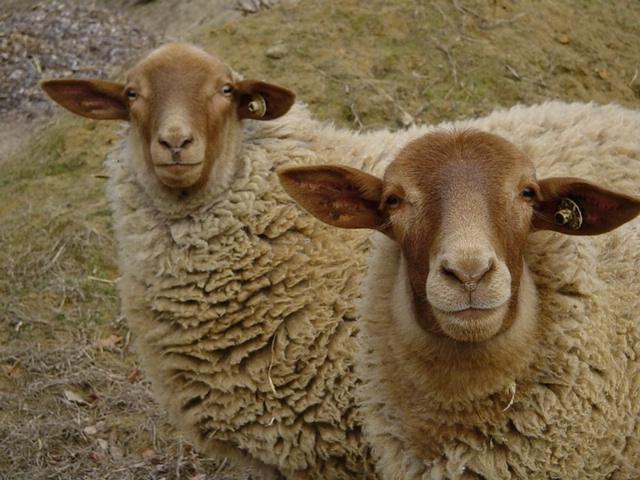 sheep and dye workshop 067