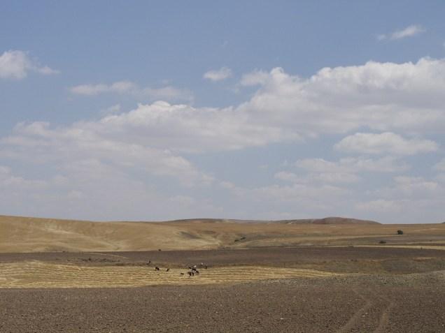 Fields, cows