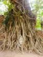 Buddha face in Bodhi tree, Wat Mahathat, Ayutthaya, Thailand