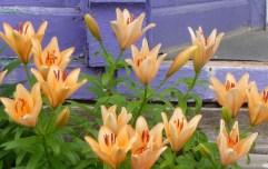 Purple Door Flowers Rejoice