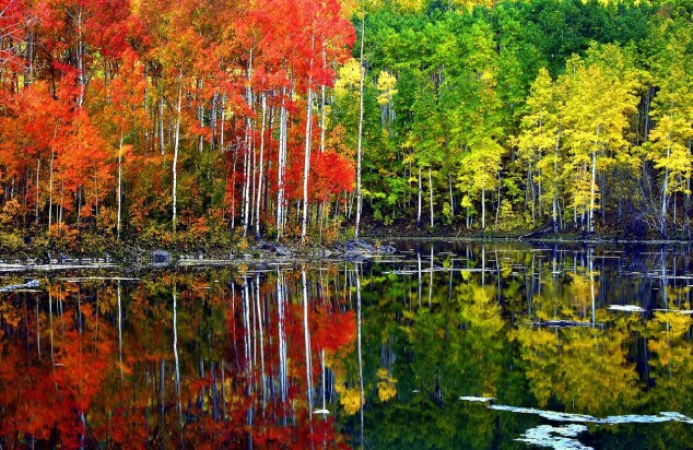 autumn-trees-reflect_skeeze