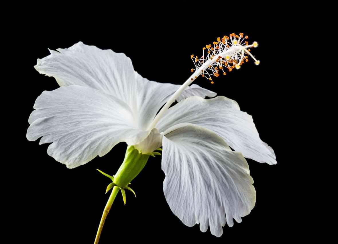 white flower bloom blossom