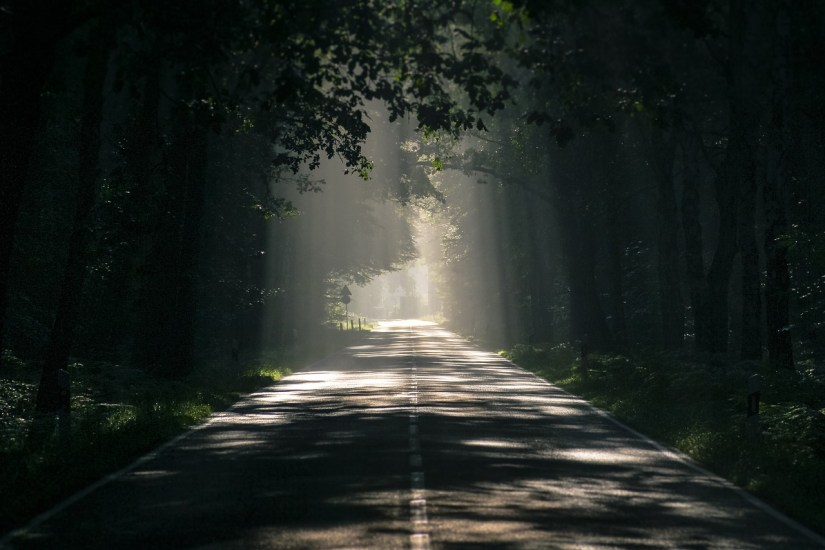 a dark tree-lined road with shafts of sunlight