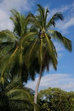 Beautiful palms all around the beach area