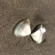 ...or shells...