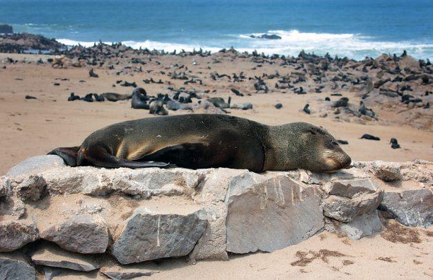flat seal2