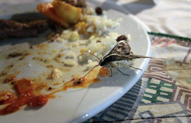 moth on plate