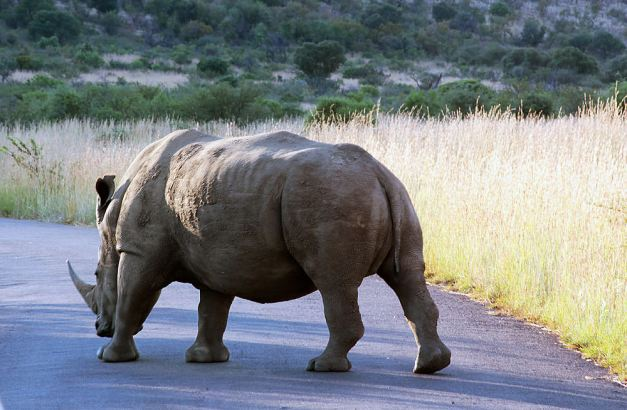 rhino05