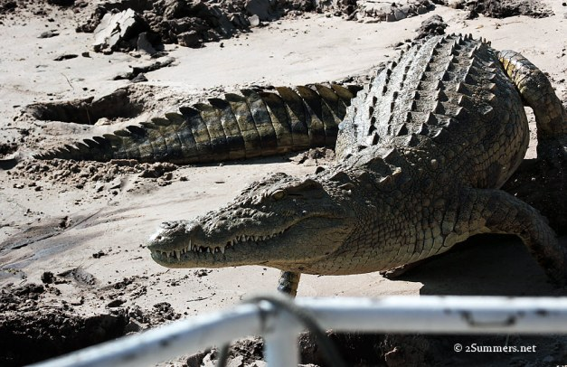 Croc by boat
