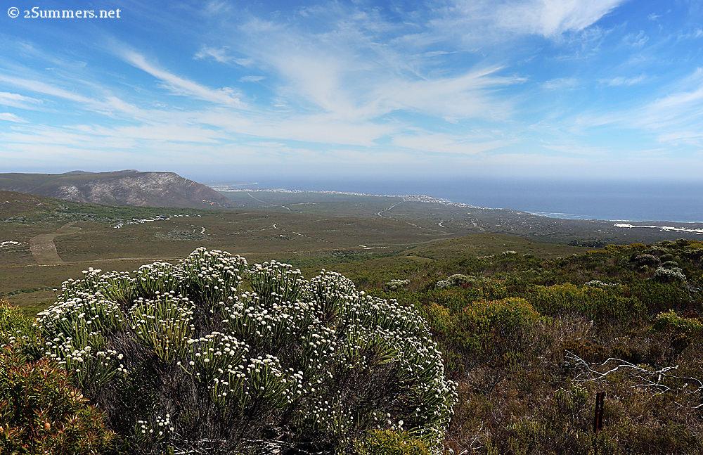 Grootbos view