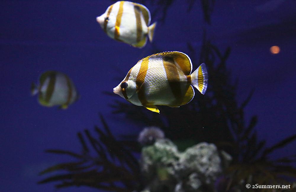 2Oceans fish