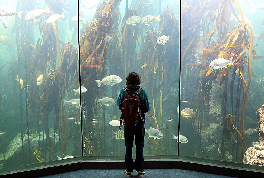 Fun Fish Photography at the Two Oceans Aquarium