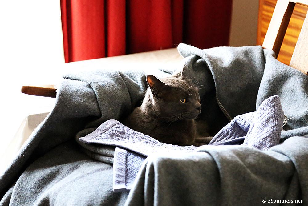 Smokey-in-blanket