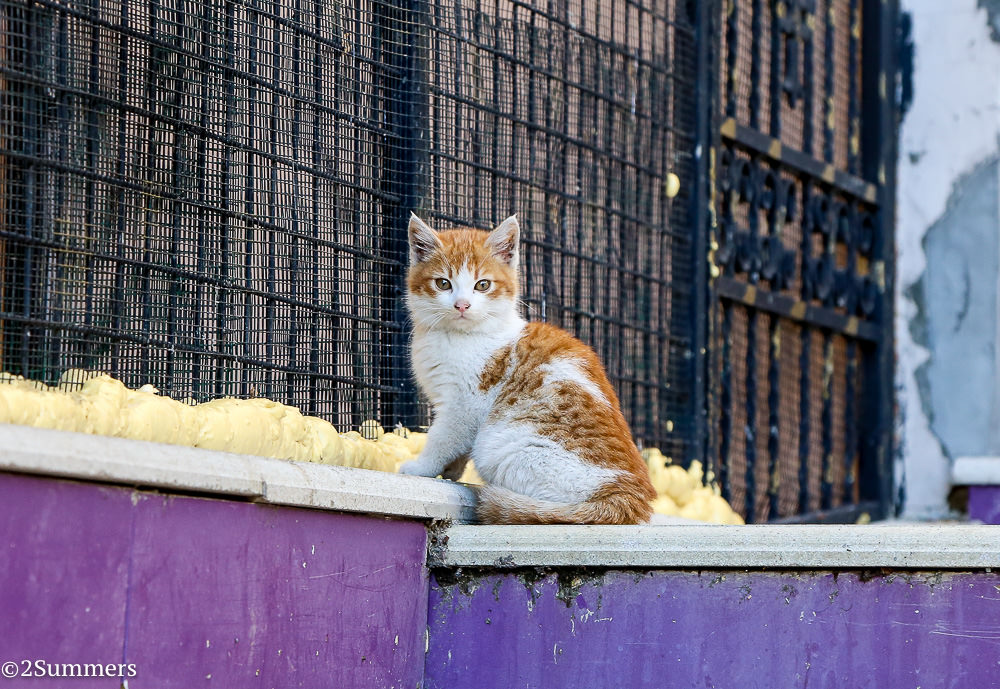 Istanbul cats-2