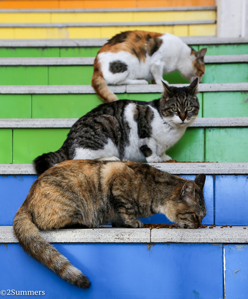Istanbul cats-8468