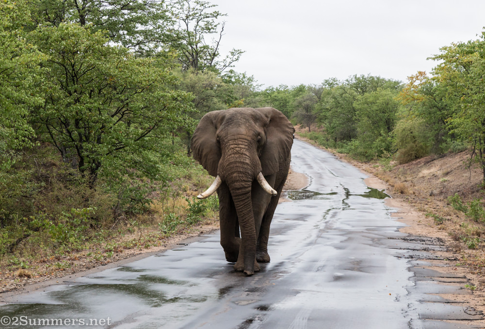 Elephant on the road.