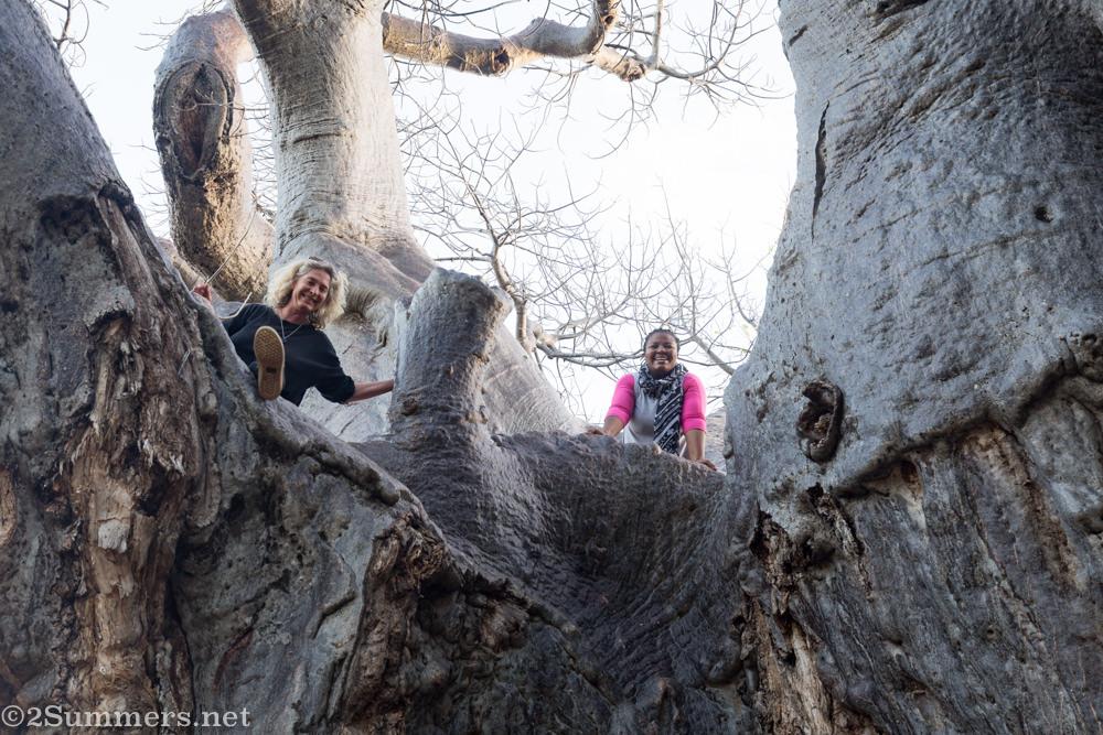 Bridge and Mini in the big baobab tree.