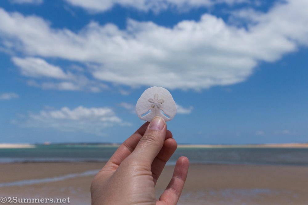 Pansy shell on Bazaruto beach