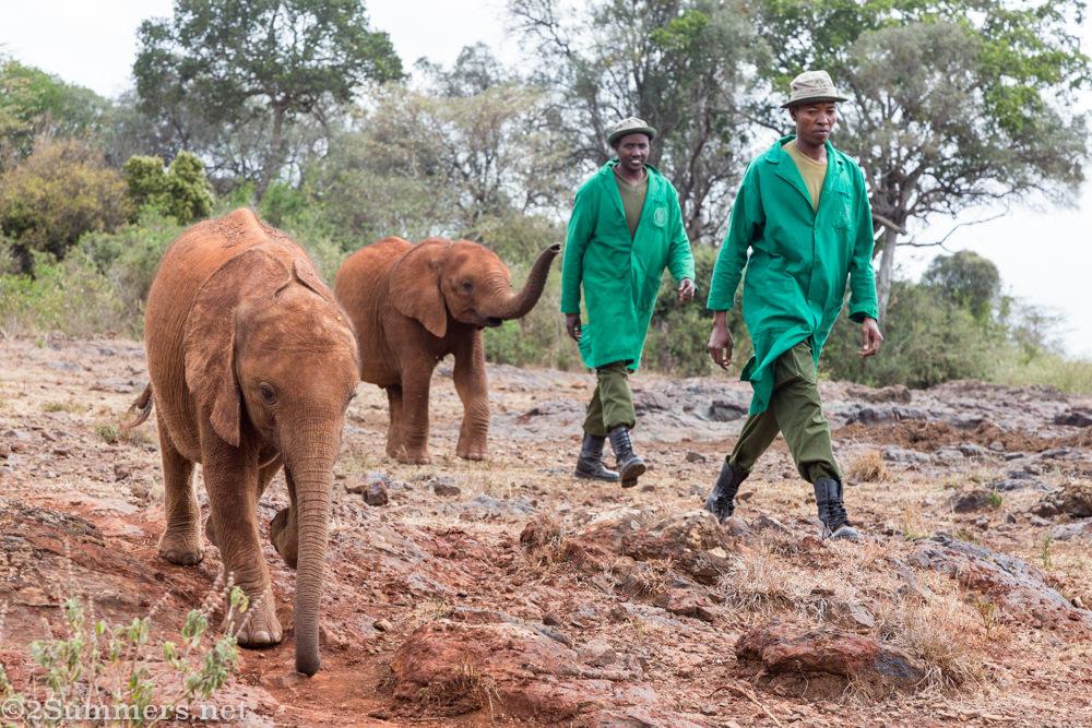 Elephants and keepers