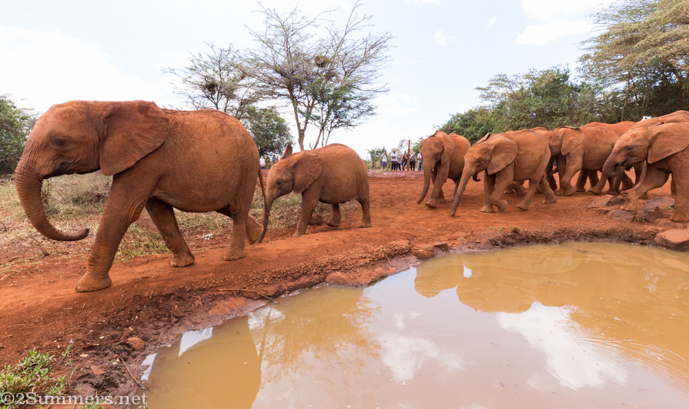 Elephants at DSWT