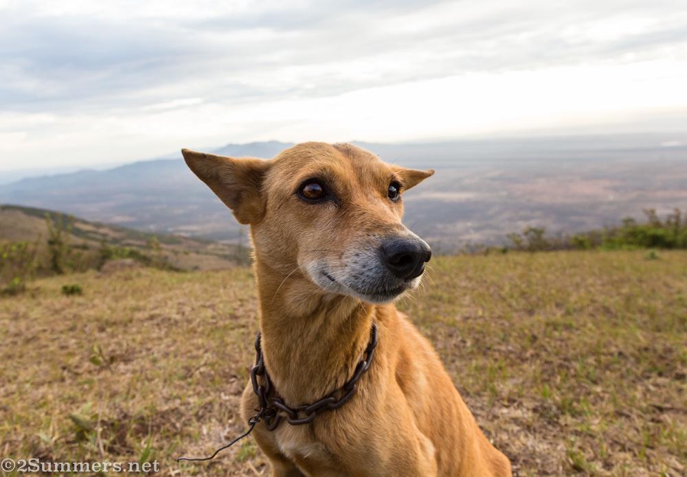 Dog on Ngong Hills