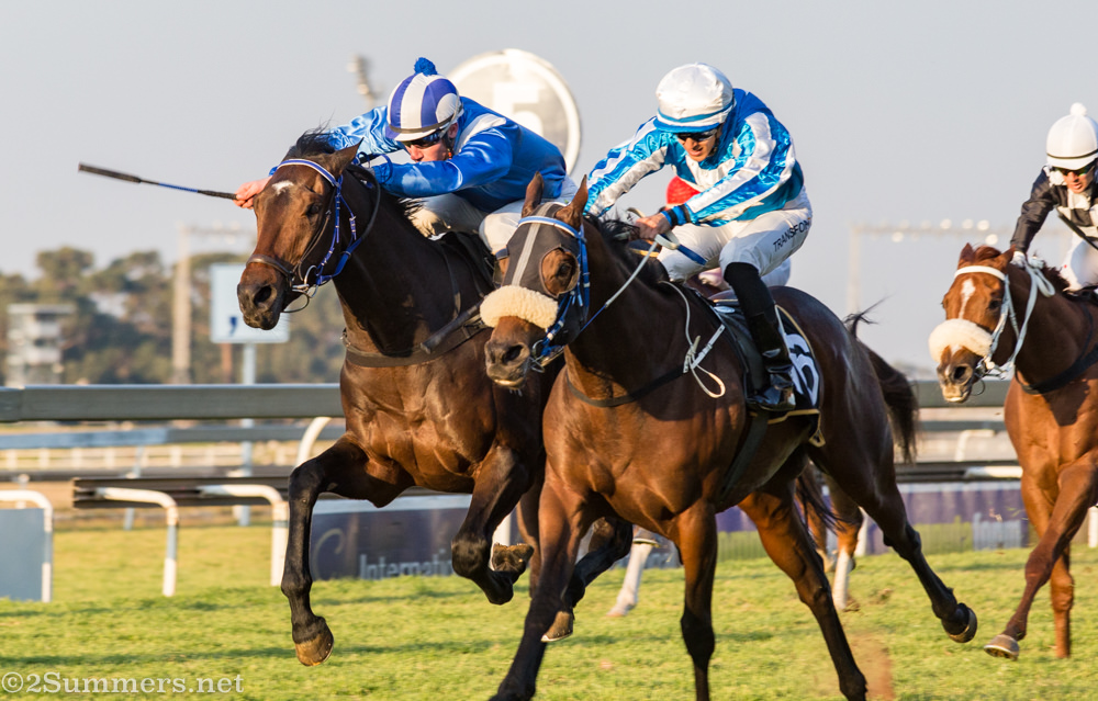 Neck and neck at Turffontein Racecourse