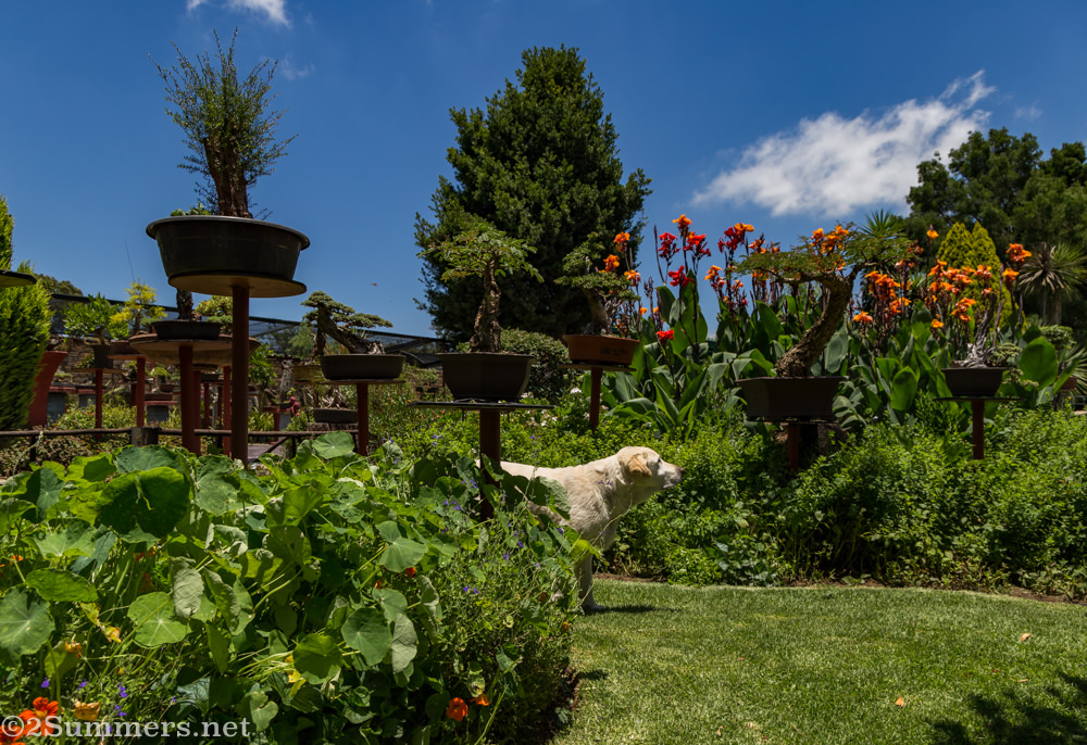 The Steyn garden and dog