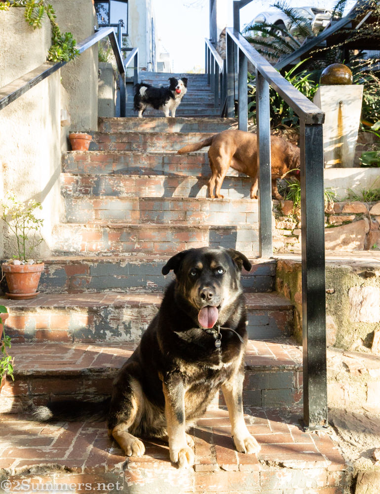 Dogs on the stairs at Zietsies