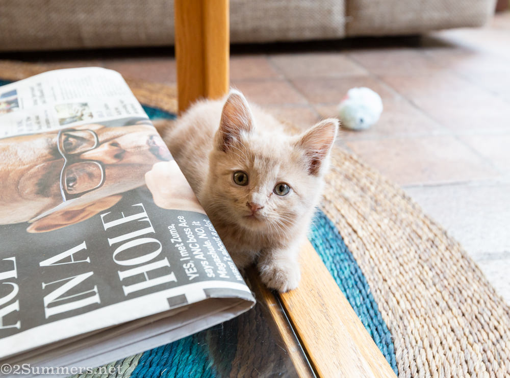 Kitten and newspaper