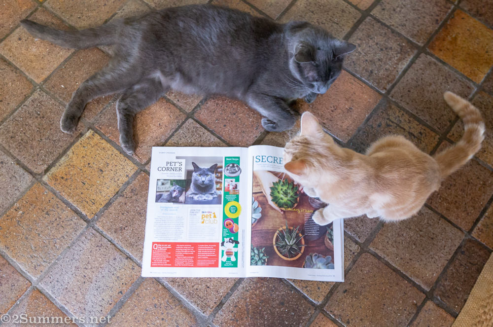 Smokey and Trixie with Fresh Living Magazine.