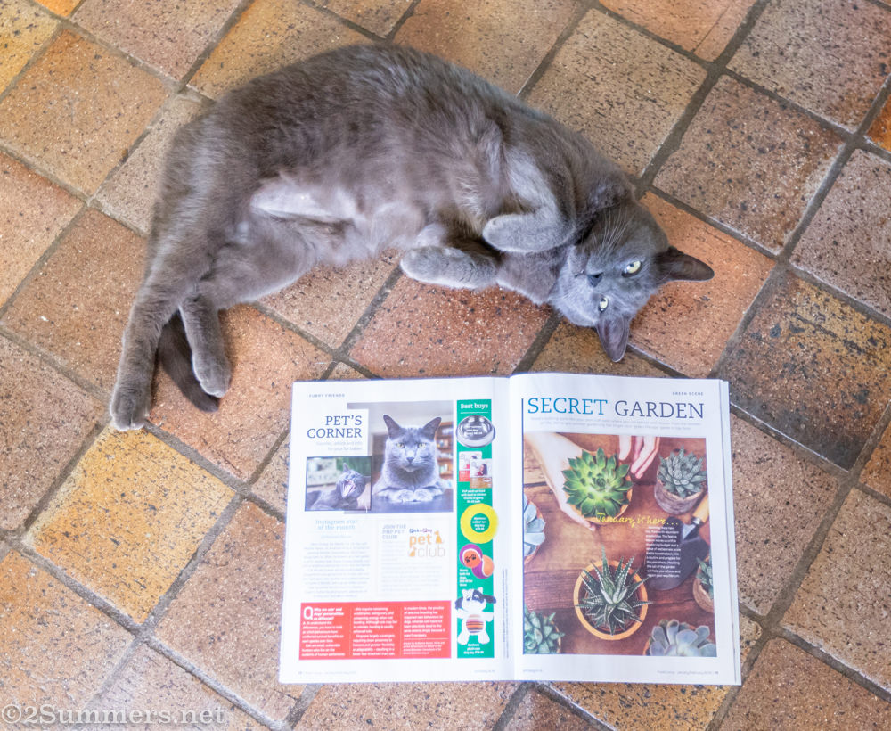 The Melville Cat with Fresh Living Magazine