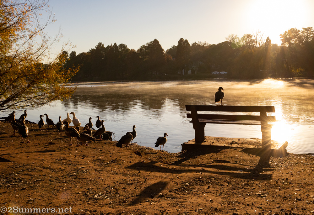 Emmarentia Dam in the morning with geese