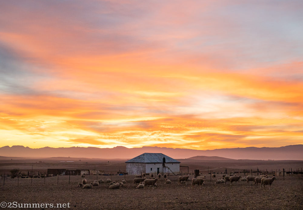 Sunrise in the Swartland at