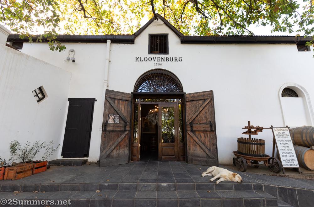 Dog outside Kloovenburg Wine Estate