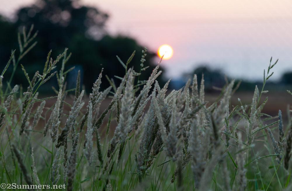 Sunrise in Kameel
