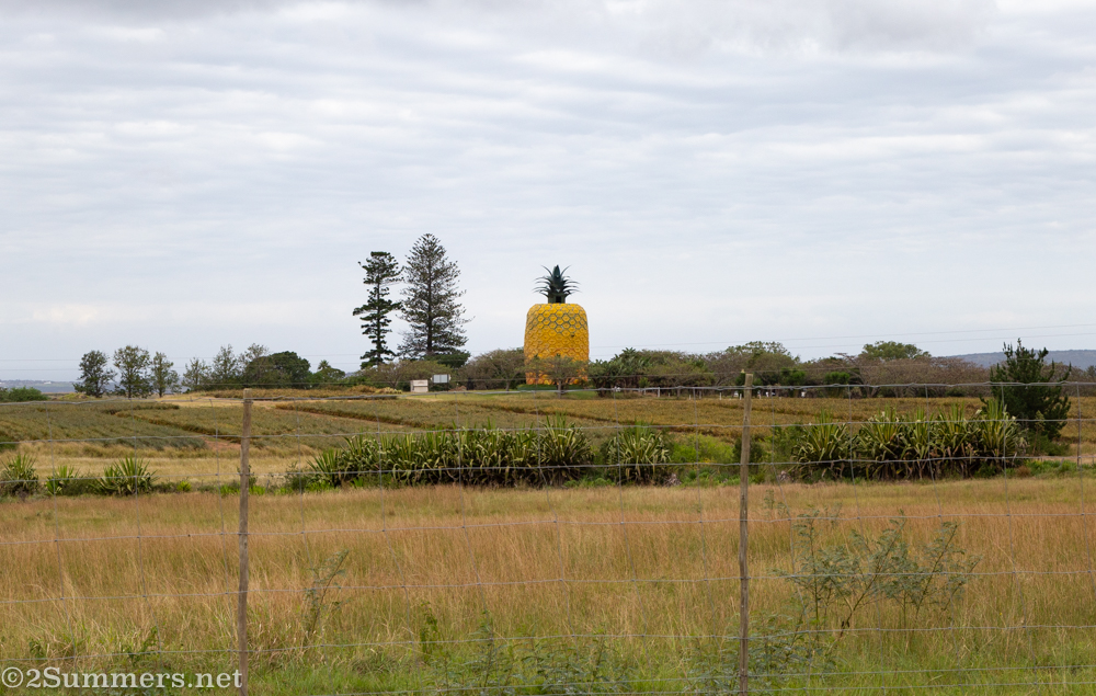 The Big Pineapple from a distance