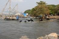 Cochin - 2010