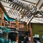 Grey Whale Skeleton Poulsbo Aquarium