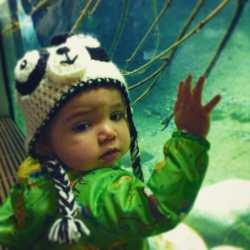 Panda hat at Aquarium