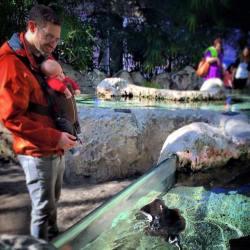 Papa TinyMan Tennessee Aquarium Touch tank 1
