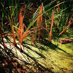 Swampgrass Fish Park Poulsbo