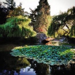 Still pond at Beacon HillPark