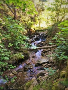 Little Smith Creek Kooskia Idaho