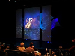 Dolphin Tales Star Spinner Show Georgia Aquarium 1