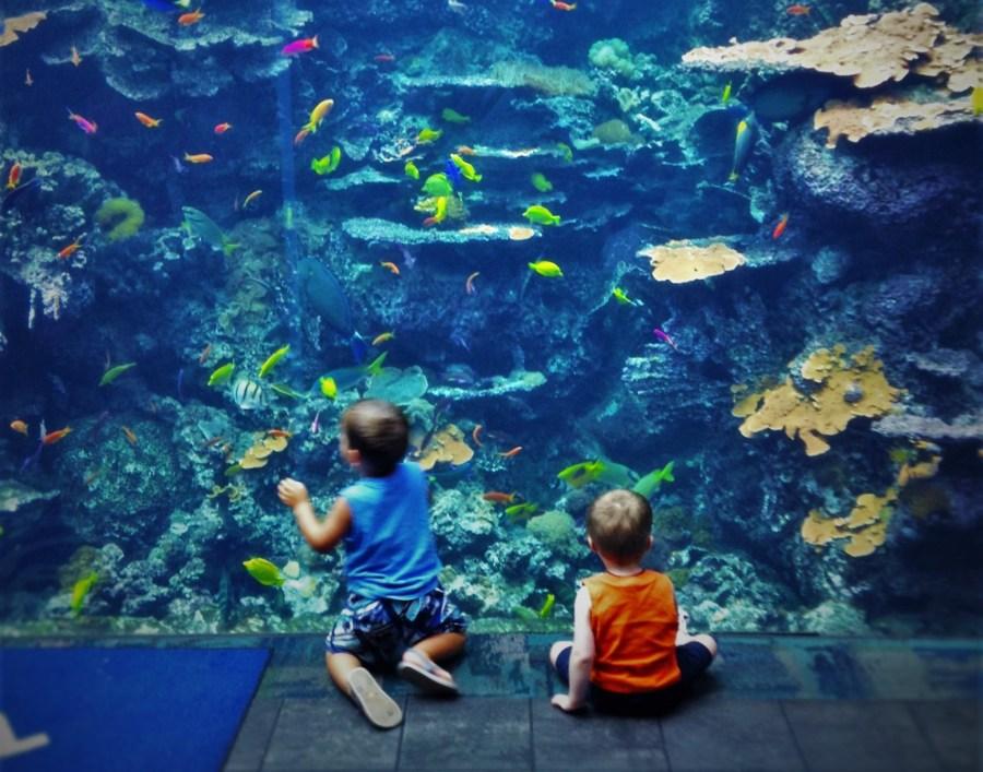 LittleMan and Fish Wall Georgia Aquarium 4 short