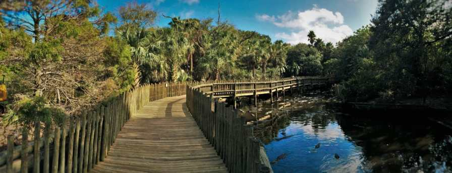 Boardwalk of Swamp at St Augustine Alligator Farm 1