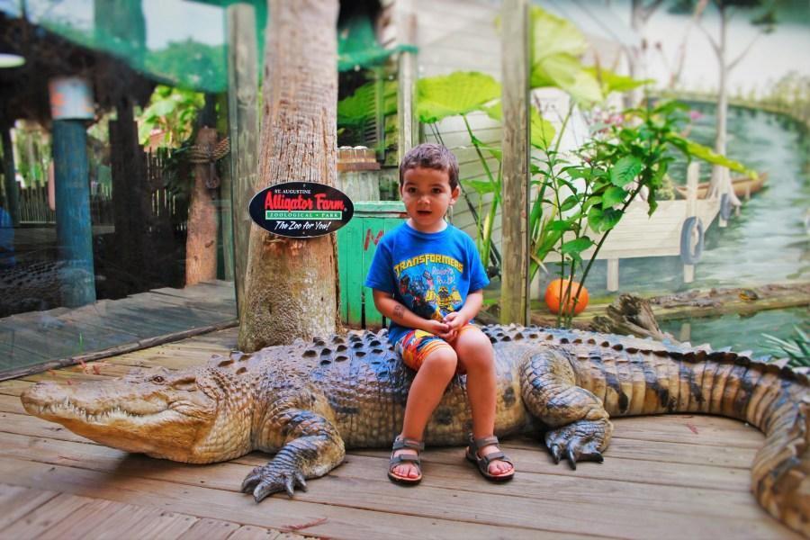 LittleMan on Alligator at St Augustine Alligator Farm 1
