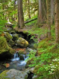 Mossy Forest Creek on Comet Falls Trail in Mt Rainier National Park 2traveldads.com
