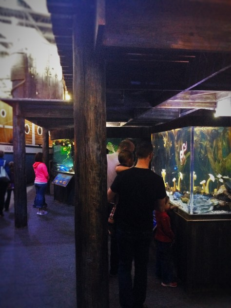 Chris Taylor and Dudes in Wharf Themed area at Denver Downtown Aquarium 1
