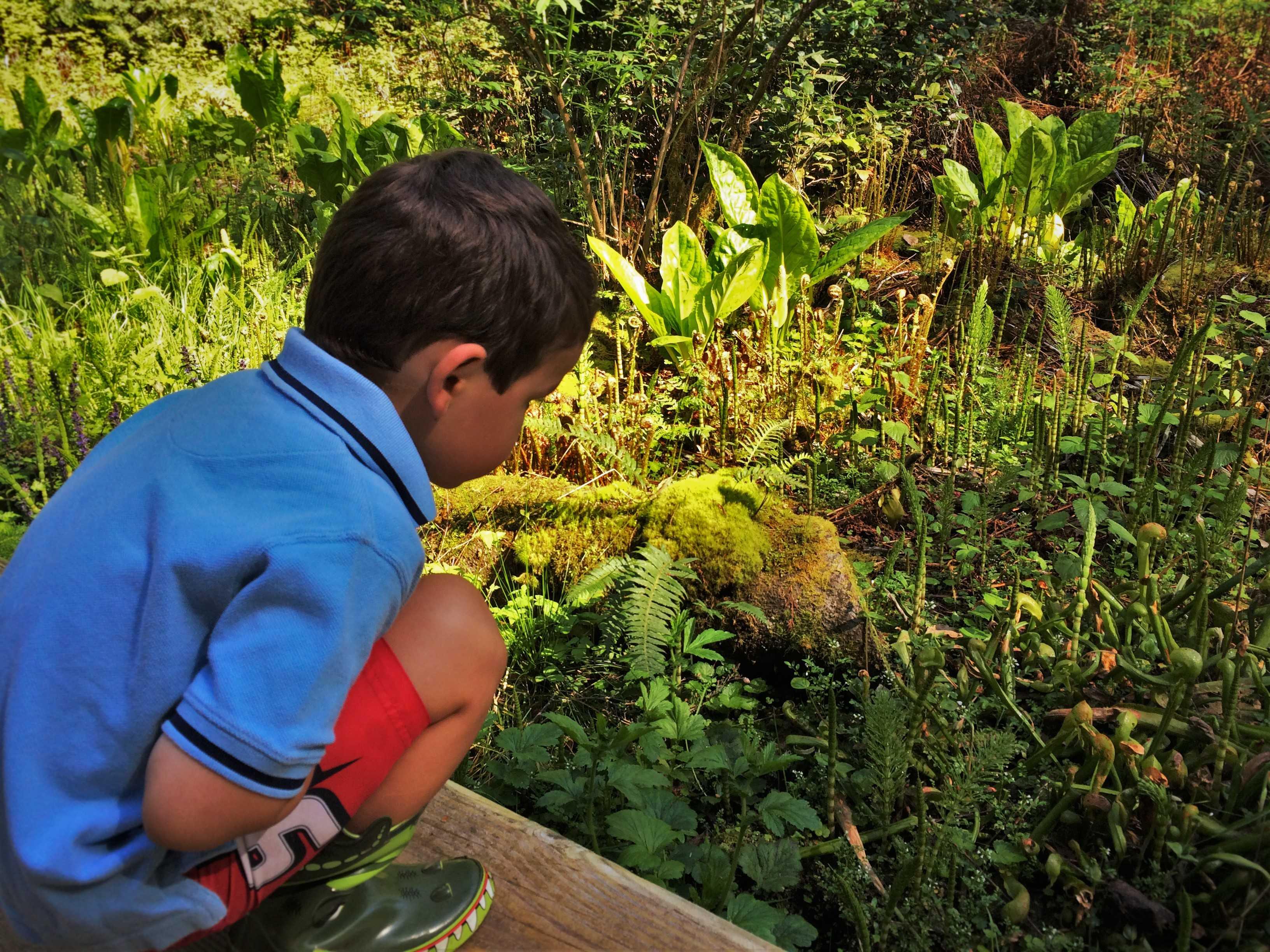 LittleMan and Pitcher Plants at Bloedel Reserve Bainbridge Island 1
